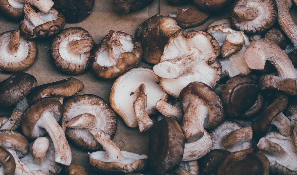 Shiitake Mushrooms to Fight Bacteria